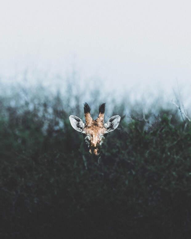 Когда дикая природа вызывает восторг. Фотограф Донал Бойд 84