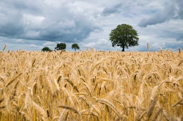 Как получить грант фермеру и не только: личный опыт. 2 часть