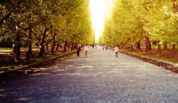 В Хорошёво-Мнёвниках появится парк с «сухим» фонтаном