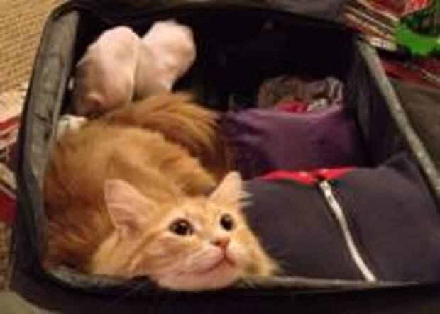 Назван лучший способ облегчить свой багаж