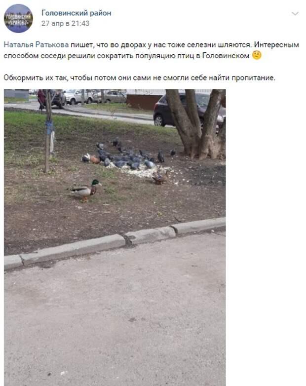Фото дня: утки терроризируют голубей в Головинском