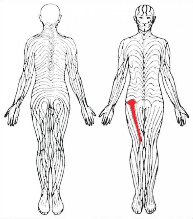 18 фактов о человеческом теле