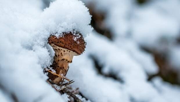 Первые грибы и комары появились в подмосковных лесах в феврале