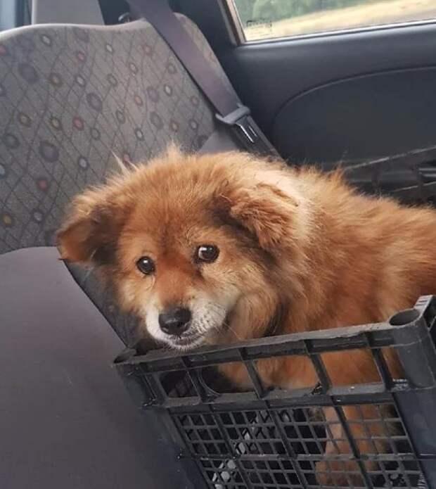 Юлия спасла старого пса и подарила ему новую счастливую жизнь