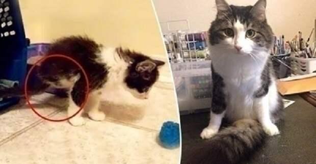 Родившийся без двух лап котенок, научился передвигаться при помощи своего супер-хвоста