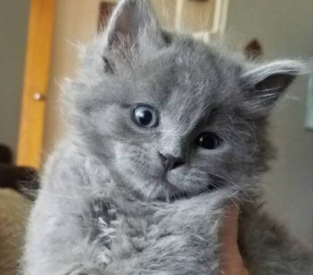 Однажды, убираясь в своей лодке, мужчина нашел малюсенького котенка