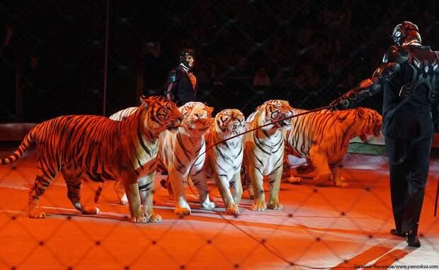 Когда откроется цирк