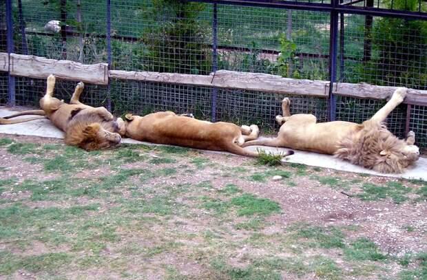 Сафари парк «Тайган» открылся!