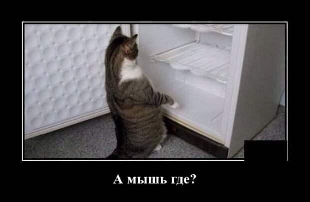 Демотиватор про мышь в холодильнике