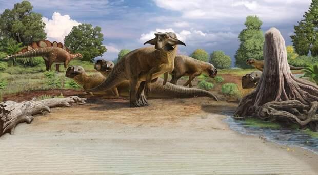 Ученые впервые в мельчайших подробностях изучили клоаку динозавра