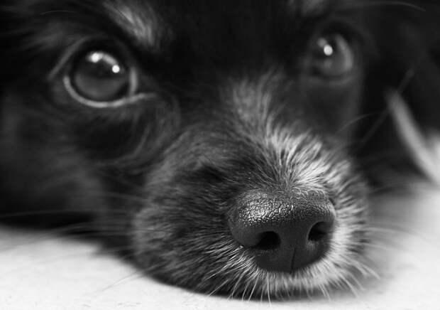 Выставка бездомных животных пройдет на «Хлебозаводе» в Бутырском