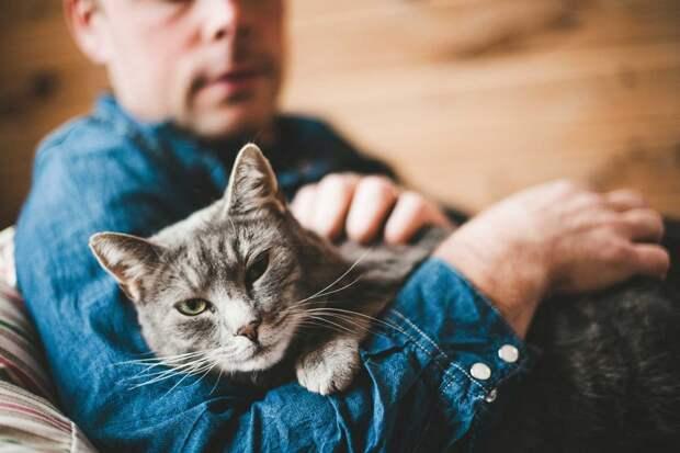 Советы для Котов и Кошек по уходу за Человеком