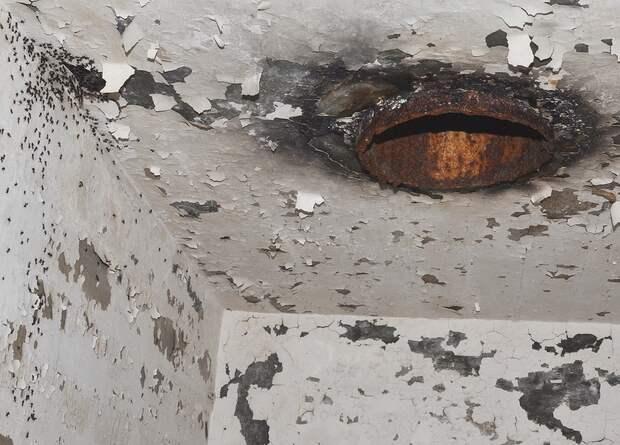 Ученые помогли потерявшимся в ядерном бункере муравьям вернуться домой