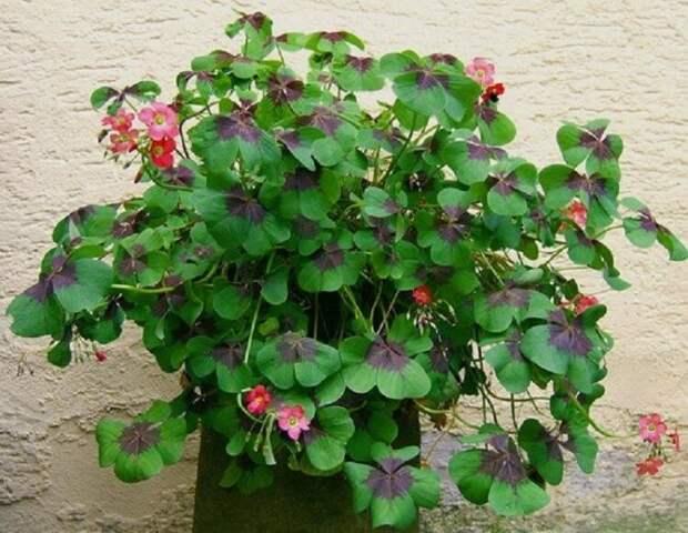 Растения для счастья