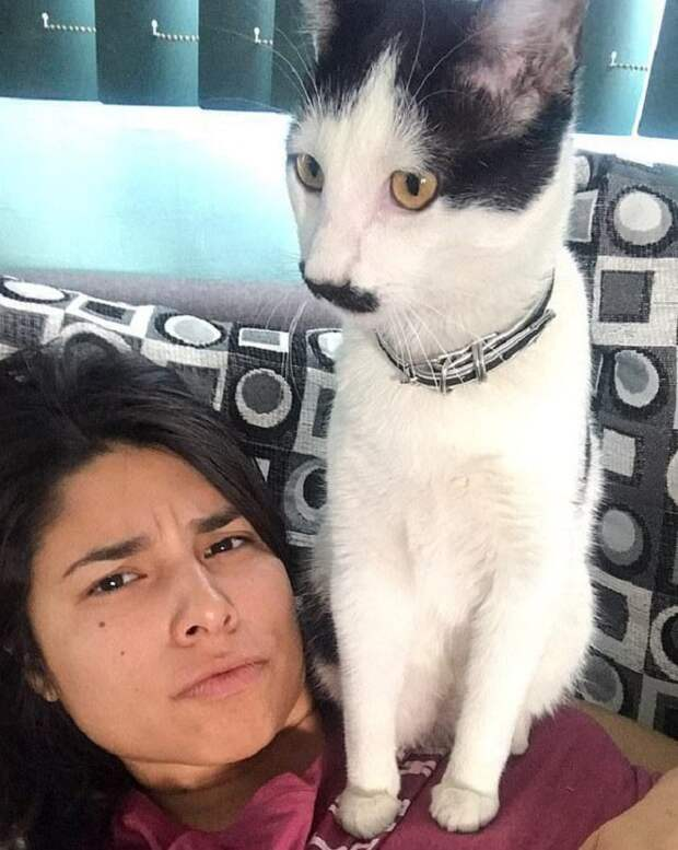 «Четвероногий мачо»: кот из Мексики умеет привлечь к себе внимание