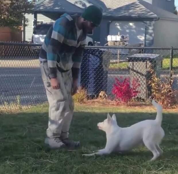 Слепая и глухая собака ежедневно встречает владельца с работы
