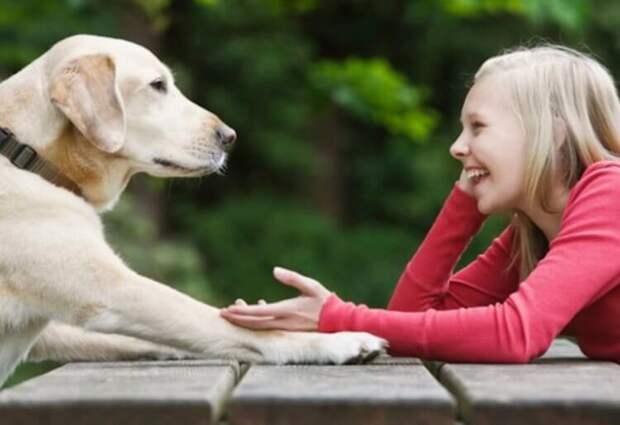 Почему животные не умеют разговаривать как люди?