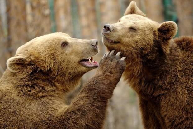 Лучшие смешные фотографии дикой природы