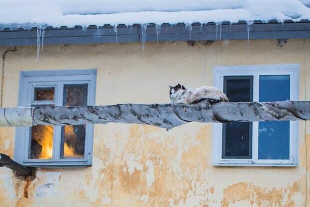 Когда нет своего балкона, а очень хочется Хвостатые, братья наши меньшие, город, кот, кошка, улица, уличные кошки, эстетика