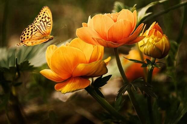 Выставка «Мир цветов» откроется в Северном Тушине