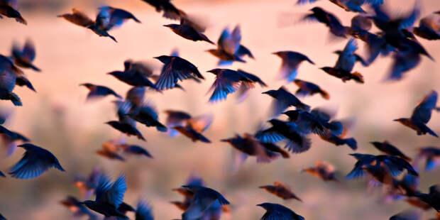 Численность птиц на Земле в шесть раз превысила количество людей