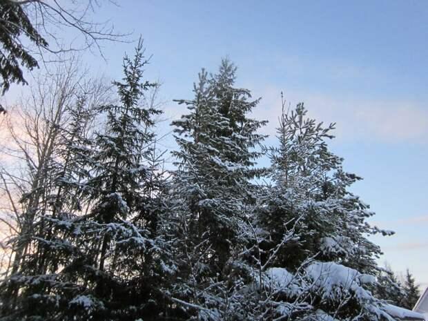 Зимнее безделье на даче
