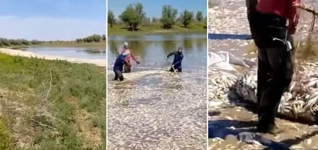Эксперт заявил о занижении масштабов гибели рыбы в Атырауской области (видео)
