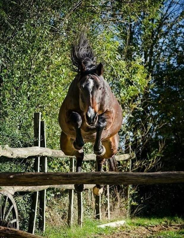 Ну лошадям летать просто положено... животные, красота, полет, природа, прыжок, удживительное
