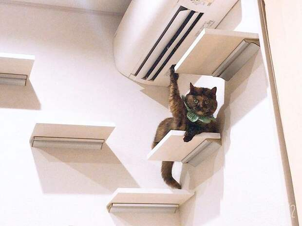 10 котов со сбившимися настройками