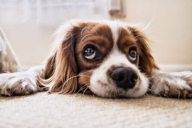Как правильно купать собаку: особенности гигиены питомцев