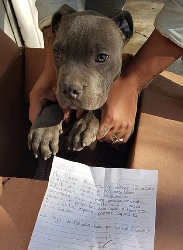 «Оставляю эту игрушку, чтобы он помнил обо мне…»: возле приюта нашли щенка, а рядом – горестную записку