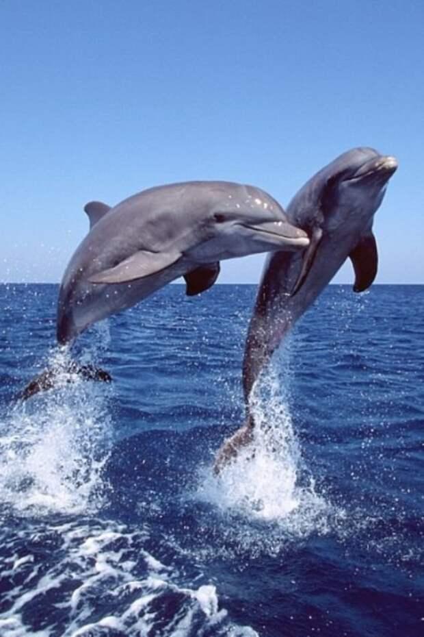 И более милые прыгуны животные, красота, полет, природа, прыжок, удживительное