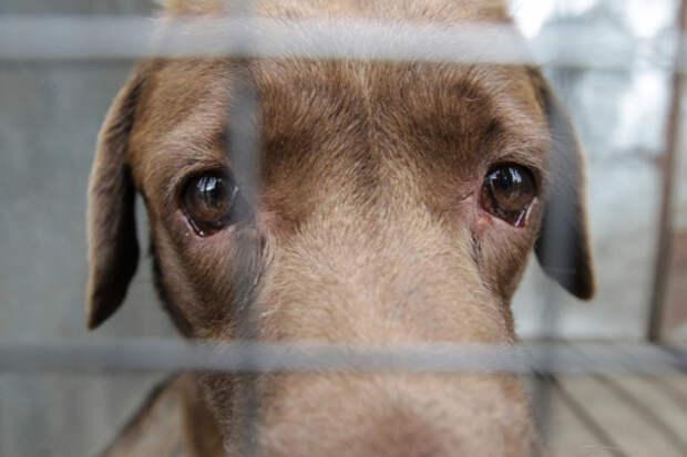 Зоозащитники хотят ввести налог на нестерилизованных домашних животных
