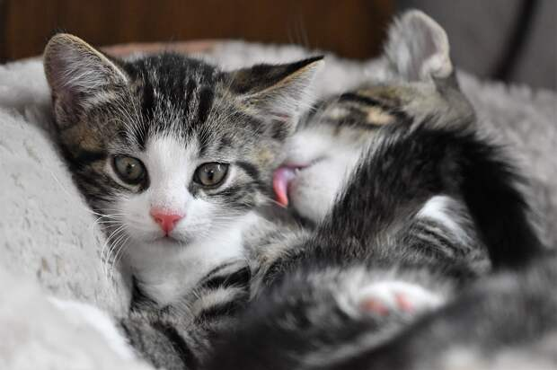 Из подвала дома на Яблочкова спасли котят