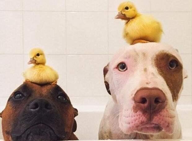 В полном смысле, сели на голову животные, наездники, смешные, фото, хитрые