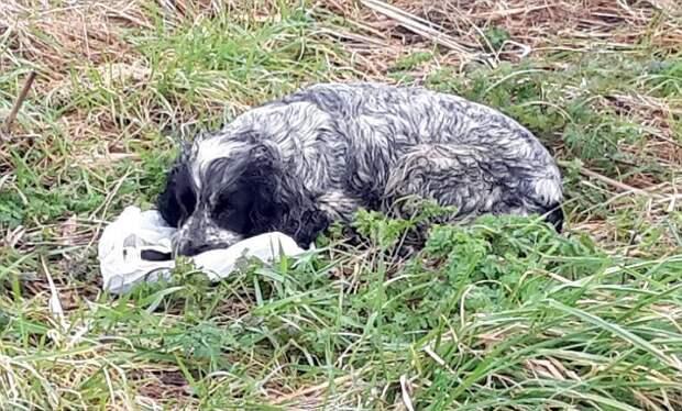 Мужчина нашел собаку, а возле нее странный пакет...