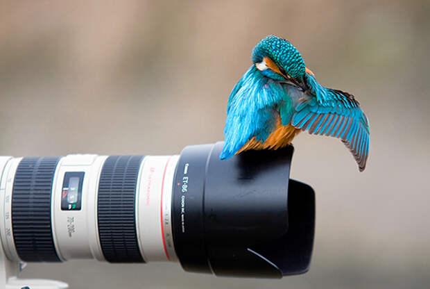 humourphoto4