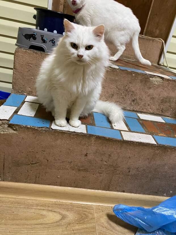 Женщина пришла в приют, а одна кошка шипела и рычала на неё... Мы гадали почему, а ответ оказался прост...