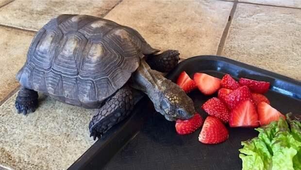Черепаха – друг на несколько поколений