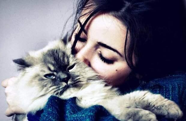 Картинки по запросу ум и Любовь к кошкам