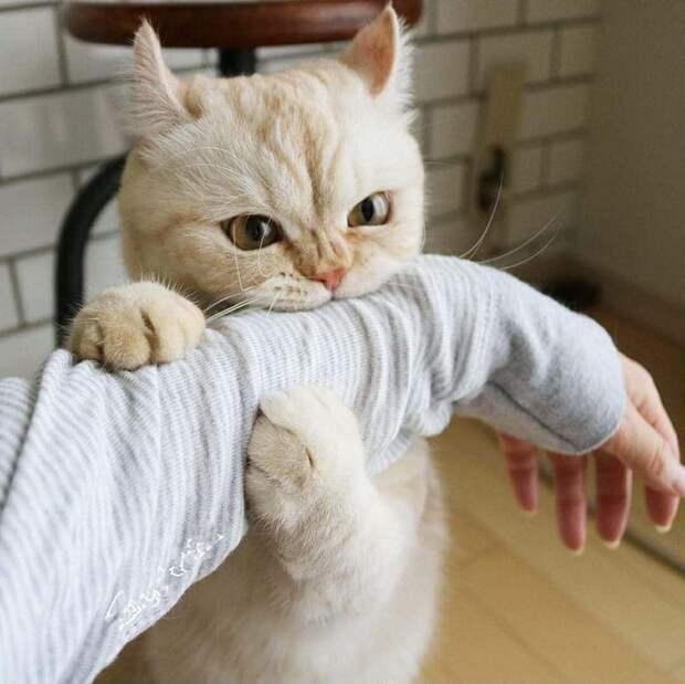 Прикольные котики: bez_truda — LiveJournal