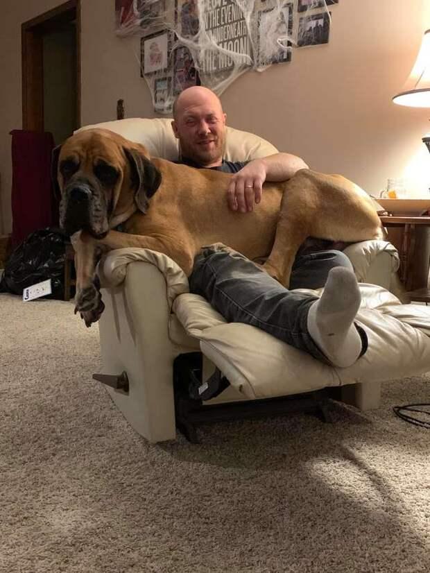 собака на руках