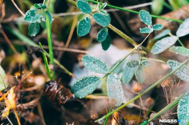 «Редиска и морковка не боятся»: омские синоптики спрогнозировали двухдневные заморозки