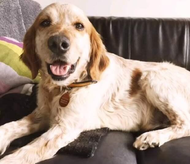 Счастливый пес