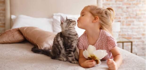 Без кота и жизнь не та! Как пушистые питомцы берегут здоровье своих хозяев
