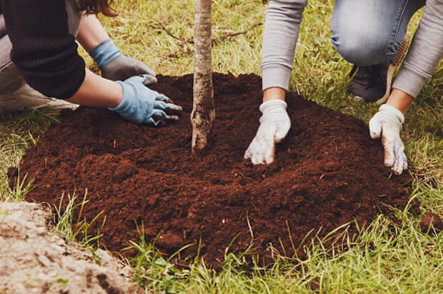 В Ботаническом саду высадят новые деревья
