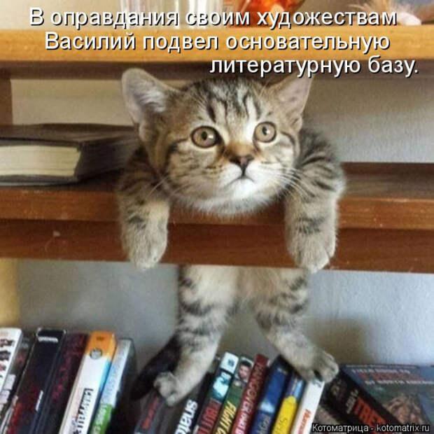Новые котоматрицы для отличного настроения