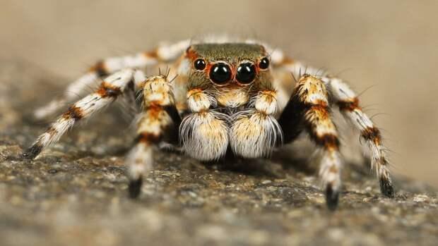 Исследование лапок пауков поспособствовало созданию мощного клея