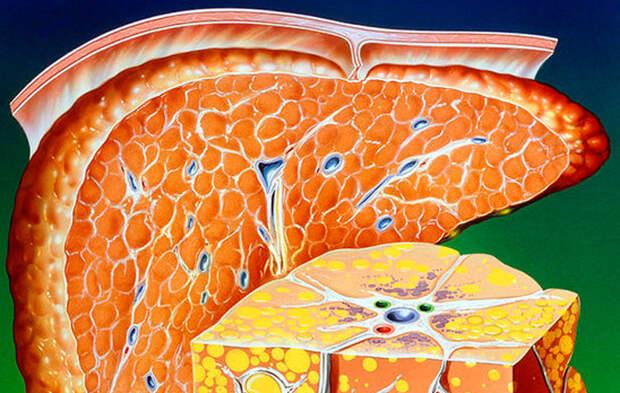 6 лучших продуктов для внутриклеточного омоложения печени