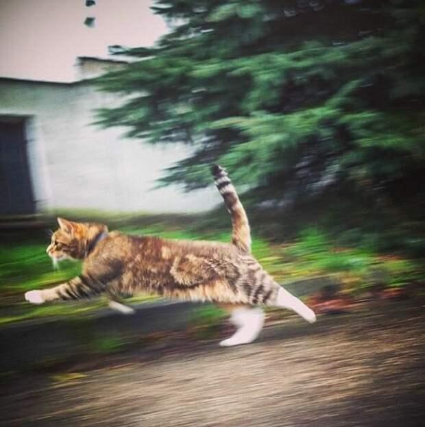 12. Говорят коту «Привет!» и «Пока!», когда он бессистемно носится по дому домашний питомец, животные, кот, кошка, привычки, прикол, юмор